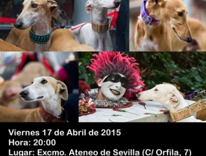 Pasarela solidaria de galgos de la Fundación Benjamin Mehnert en el Ateneo de Sevilla. Viernes 17 de abril a las 20 horas.